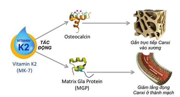 mk7-giup-tang-chieu-cao