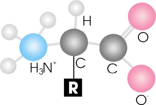 acid-amin-la-gi-thuoc-tang-chieu-cao