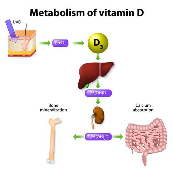 vitamin-d-khong-the-thieu-cho-su-phat-trien-cua-xuong