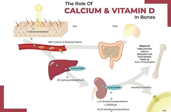 vitamin-d-va-canxi-la-duong-chat-quan-trong-cho-su-phat-trien-cua-xuong