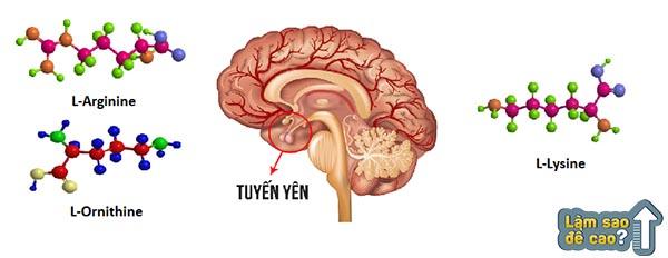 tuyen-yen-san-sinh-hormone-tang-truong-giup-cai-thien-chieu-cao